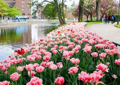 Stadsparken i Borås